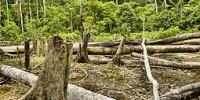 Simkea-Ortschaft:Rodegebiet