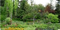 Simkea-Ortschaft:Verwilderter Garten